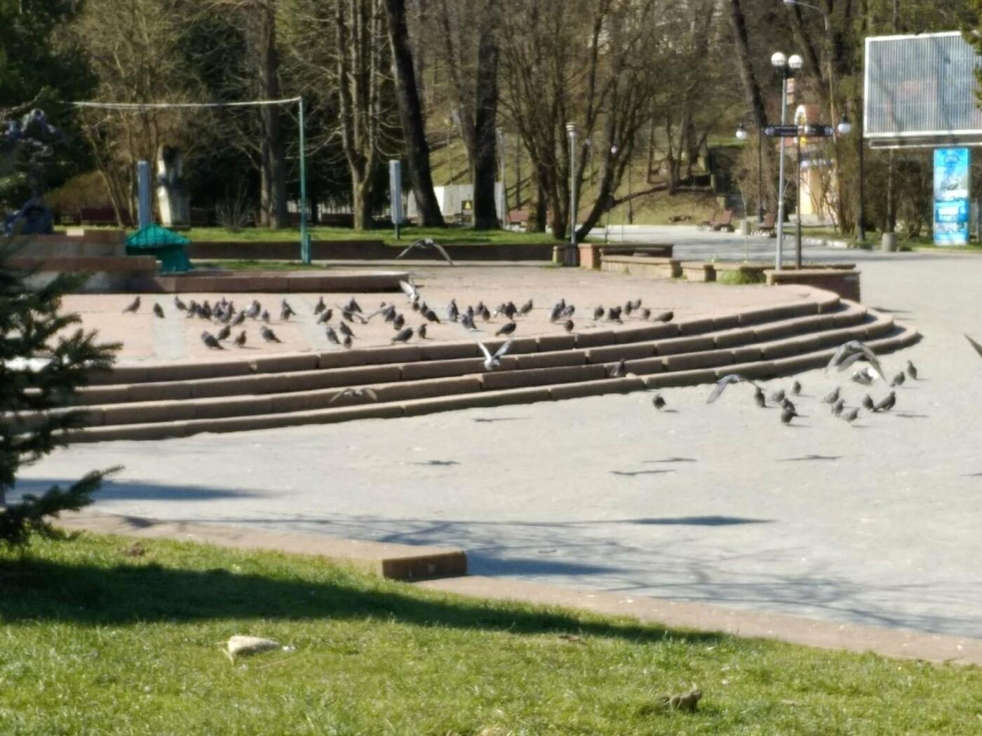 Трускавецьким голубам COVID-19 не страшний: Фотоогляд карантинного парку, фото-5
