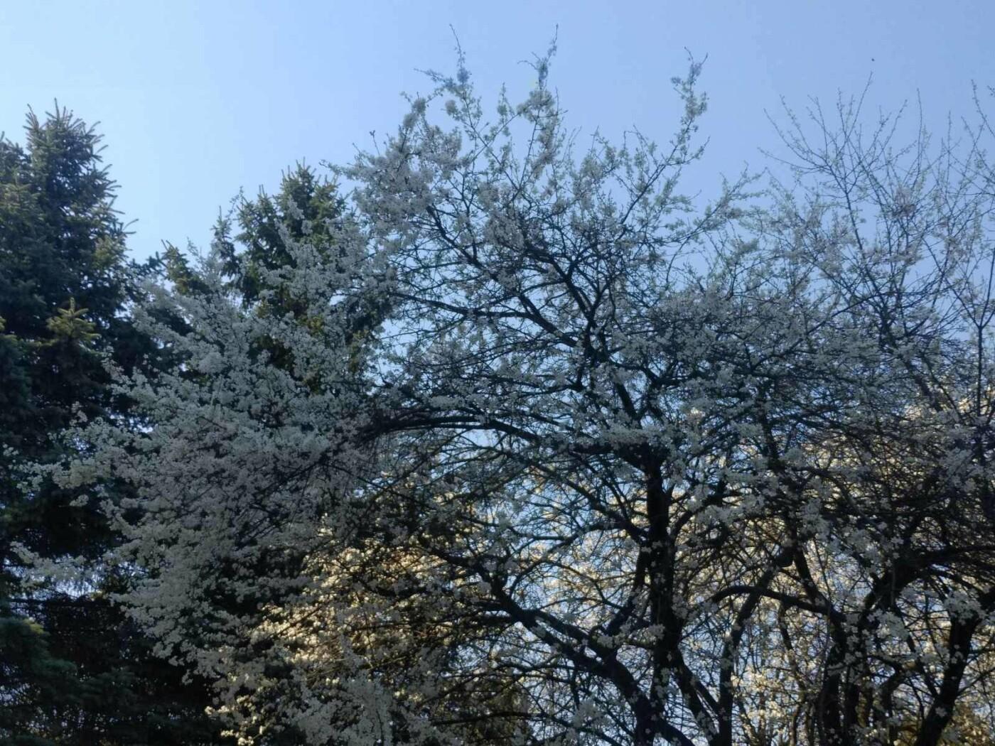 Трускавець розквітає: Фото трускавецької краси, фото-11, Фото - 03247.com.ua
