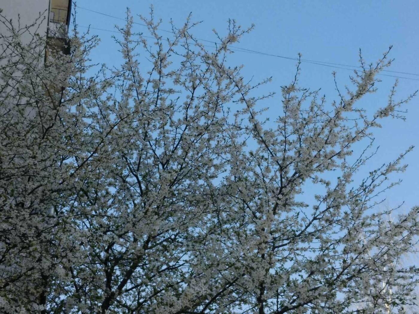 Трускавець розквітає: Фото трускавецької краси, фото-13, Фото - 03247.com.ua