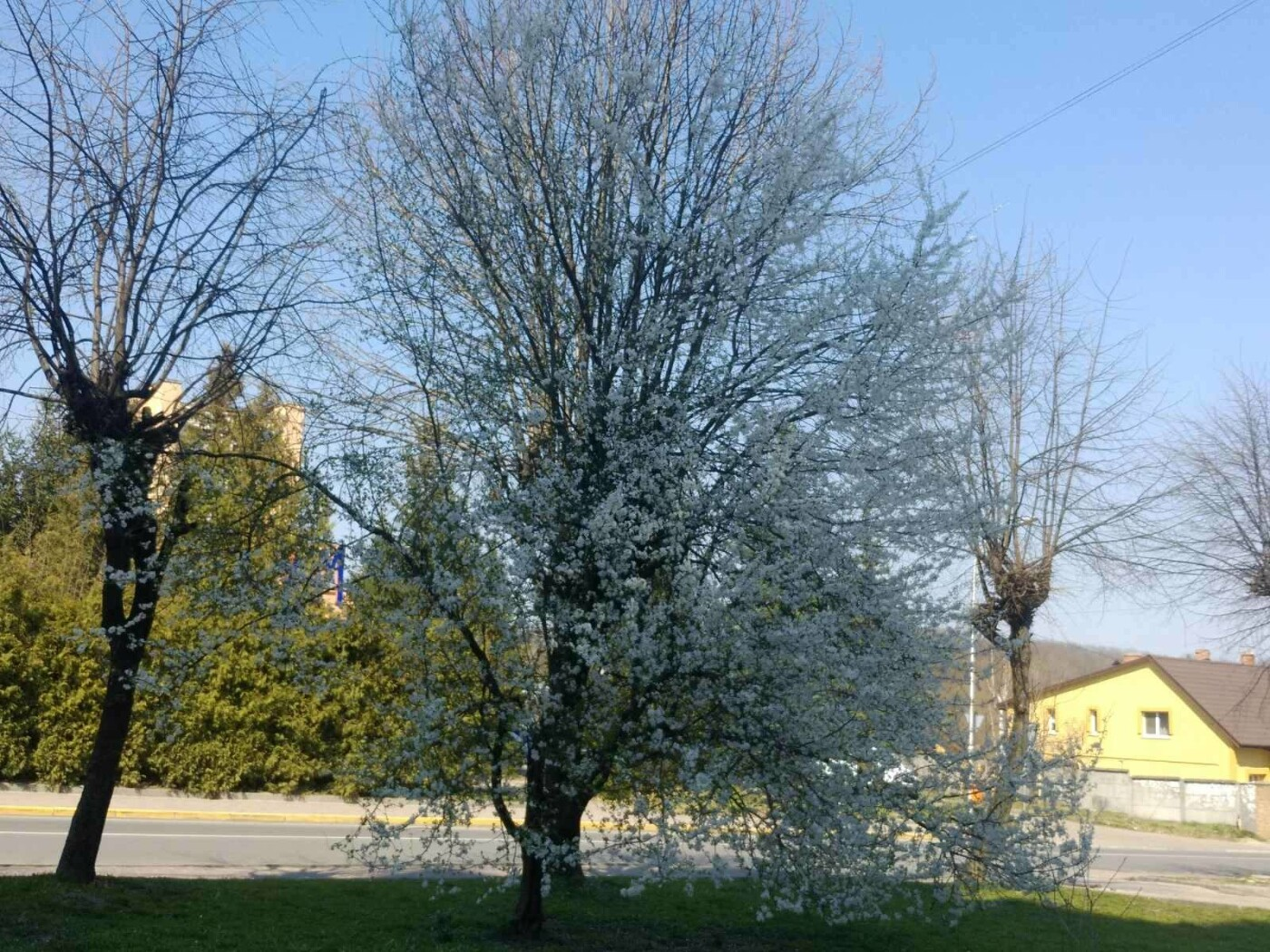 Трускавець розквітає: Фото трускавецької краси, фото-2, Фото - 03247.com.ua