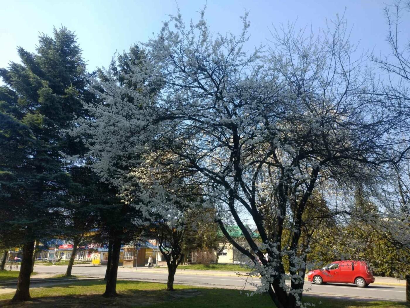 Трускавець розквітає: Фото трускавецької краси, фото-3, Фото - 03247.com.ua