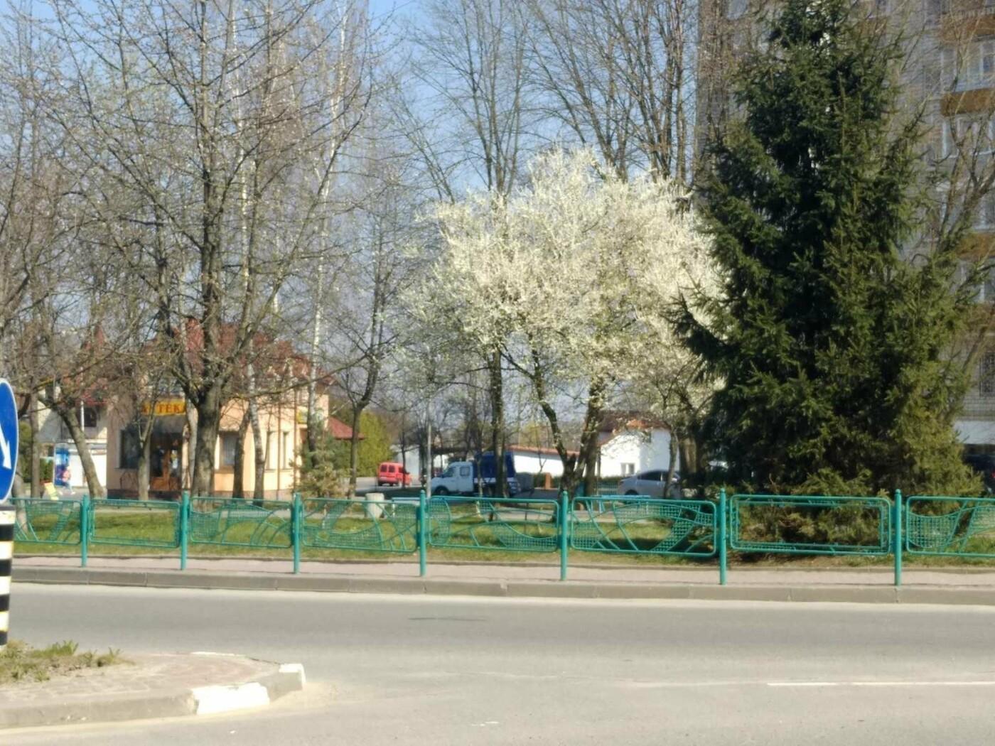 Трускавець розквітає: Фото трускавецької краси, фото-10, Фото - 03247.com.ua