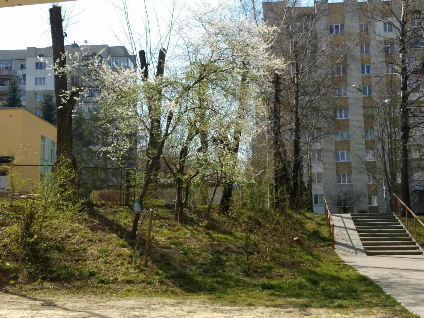 Трускавець розквітає: Фото трускавецької краси, фото-12, Фото - 03247.com.ua