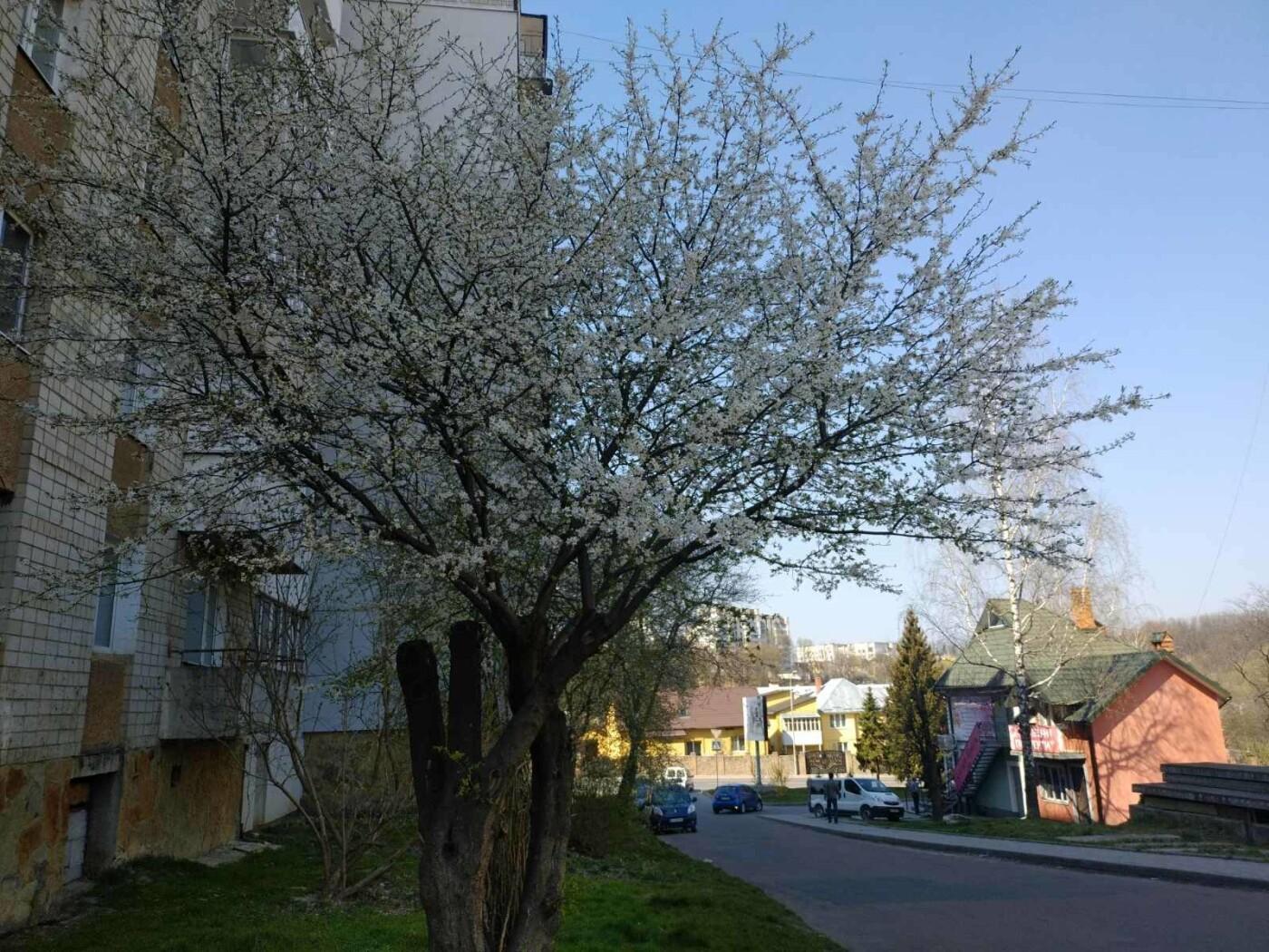 Трускавець розквітає: Фото трускавецької краси, фото-6, Фото - 03247.com.ua