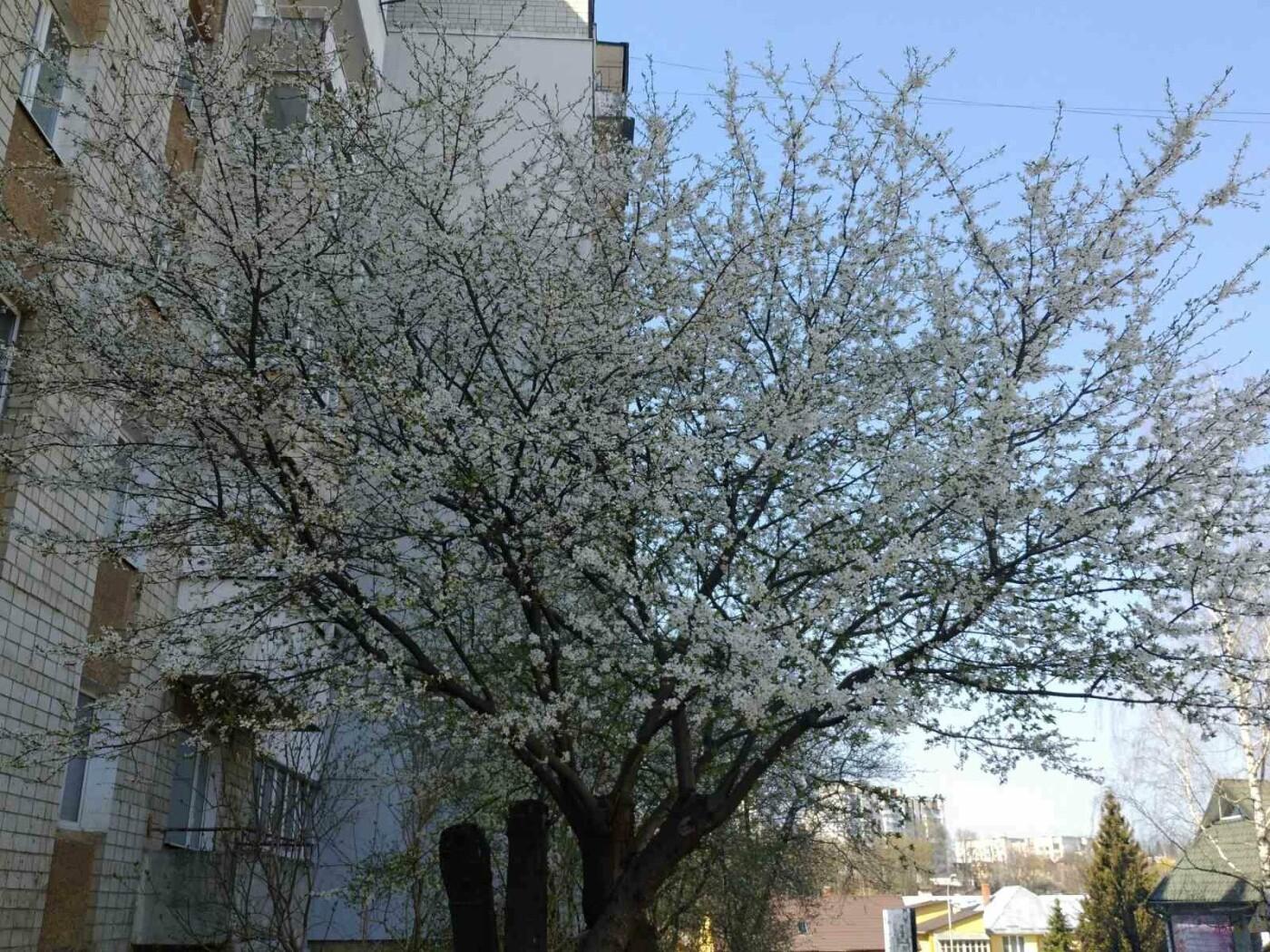 Трускавець розквітає: Фото трускавецької краси, фото-5, Фото - 03247.com.ua