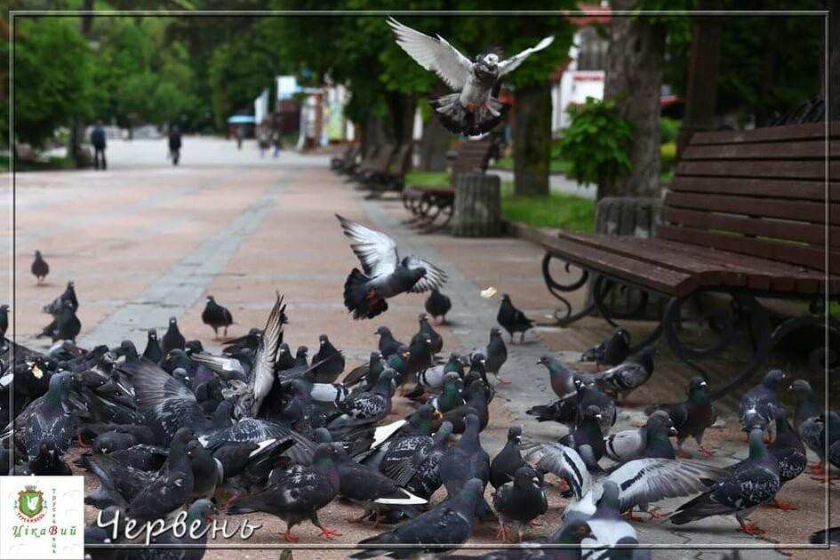 Голуби в курортному парку сумують за відпочивальниками