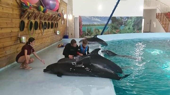 Дельфінарій «Оскар» здійснив мрію хворих діток , фото-3