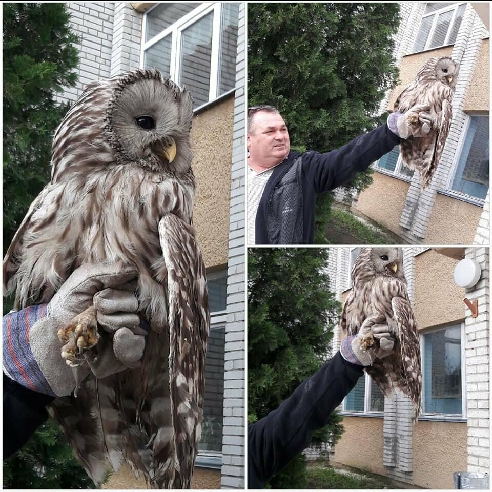 Стебничани врятували сову, що травмувалась біля школи, фото-3
