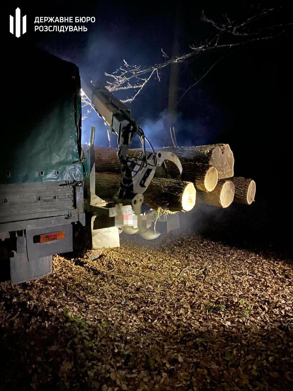 На Львівщині незаконно вирубували дуби, фото-2