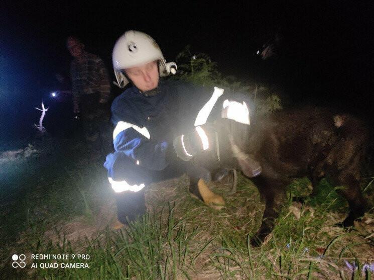 В Бориславі вночі рятували собаку з каналізаційного люку, фото-1