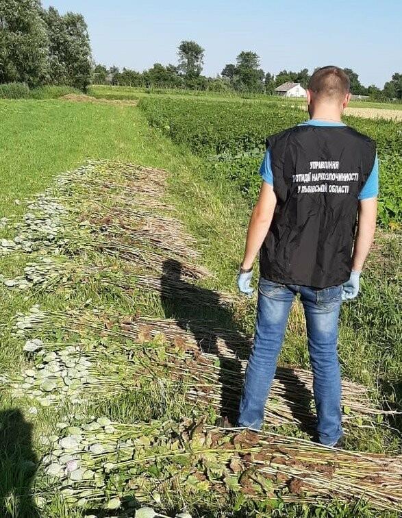На Львівщині виявили масові посадки маку і коноплі, фото-1