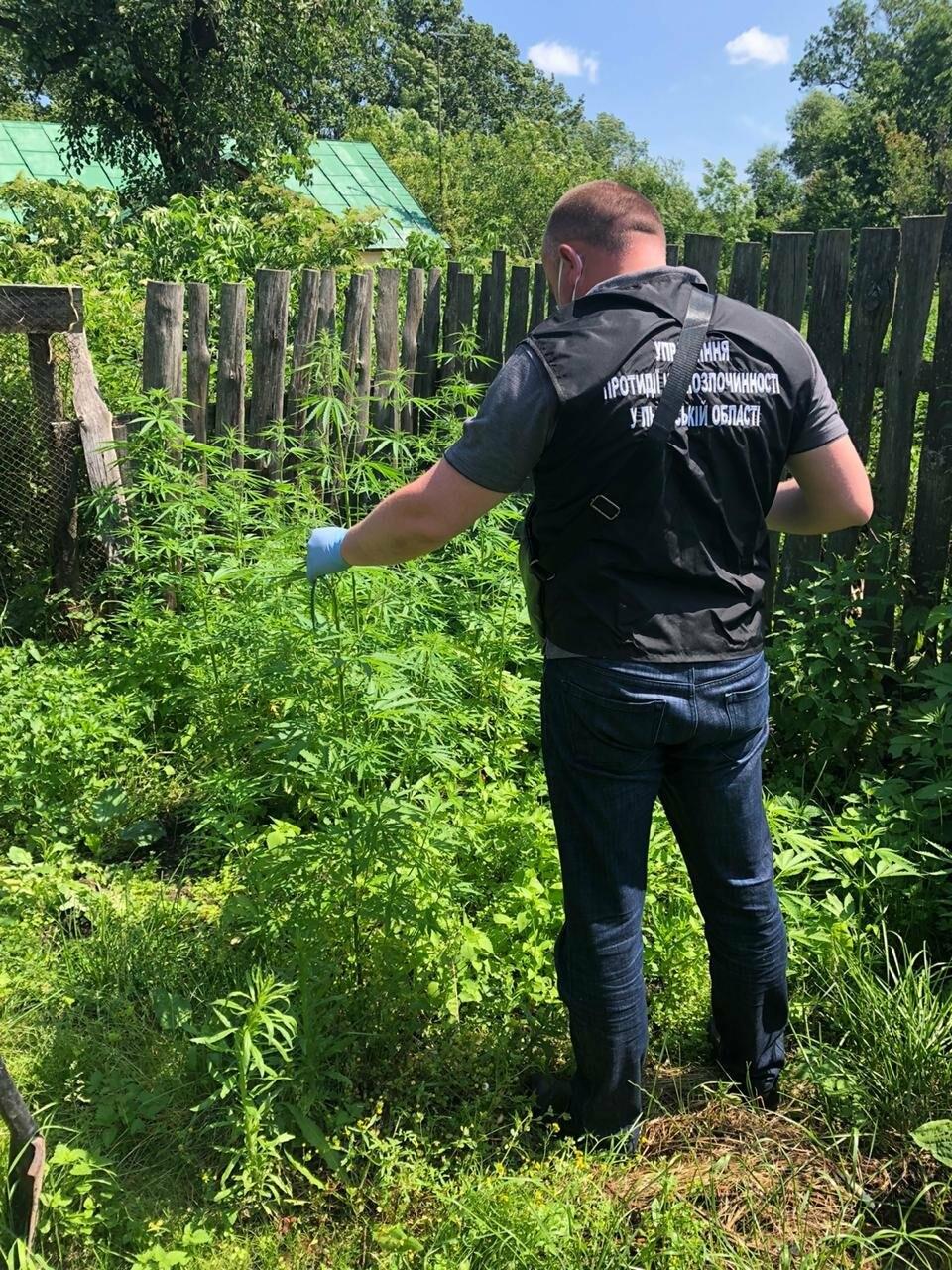 На Львівщині виявили масові посадки маку і коноплі, фото-4