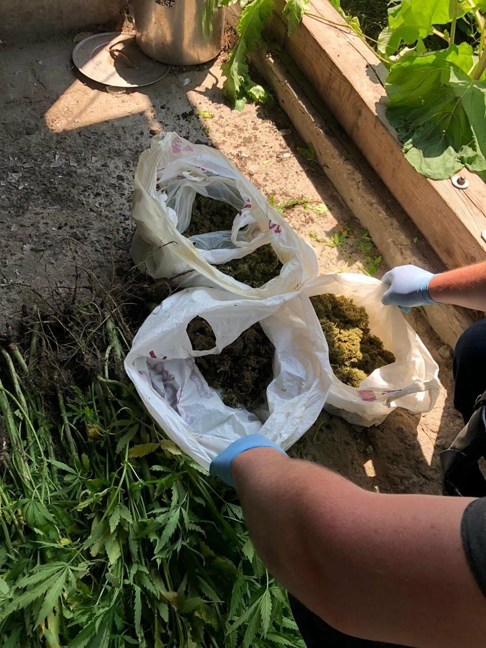 На Львівщині виявили масові посадки маку і коноплі, фото-5