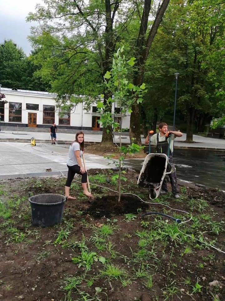 Площу перед бюветом у Трускавці озеленили новими деревами, фото-1