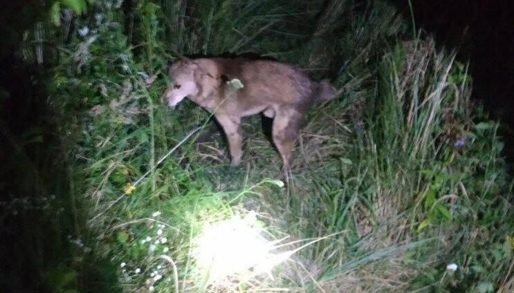 В Дрогобичі з каналізаційного люку рятували собаку, фото-1