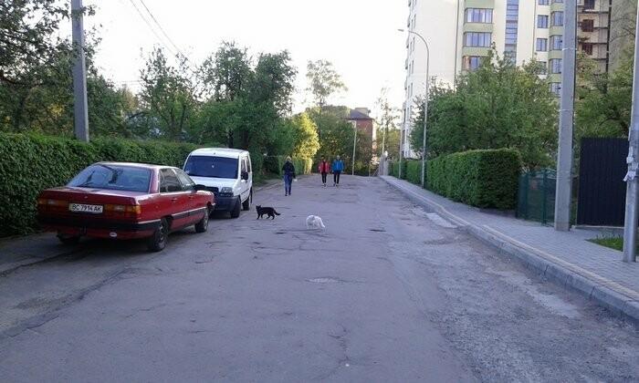 Живі паркани у Трускавці: чим вони особливі?, фото-3