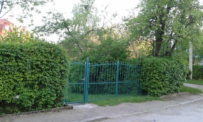 Живі паркани у Трускавці: чим вони особливі?, фото-4