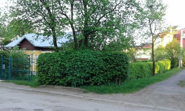 Живі паркани у Трускавці: чим вони особливі?, фото-5