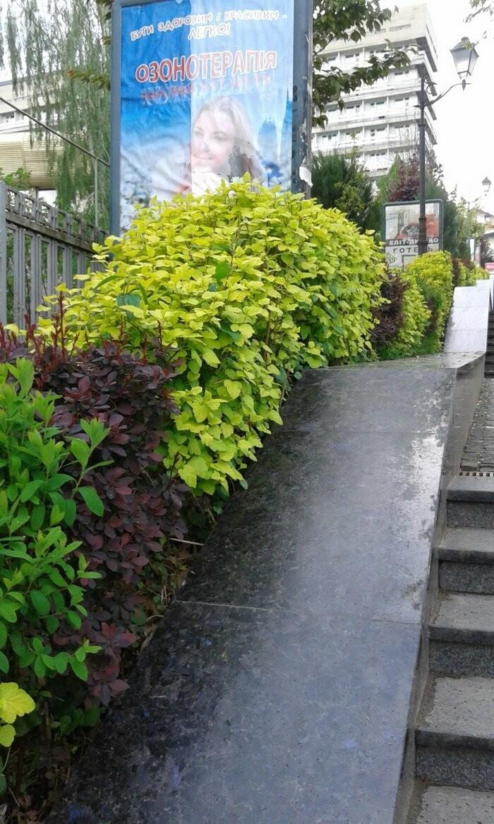 Живі паркани у Трускавці: чим вони особливі?, фото-10