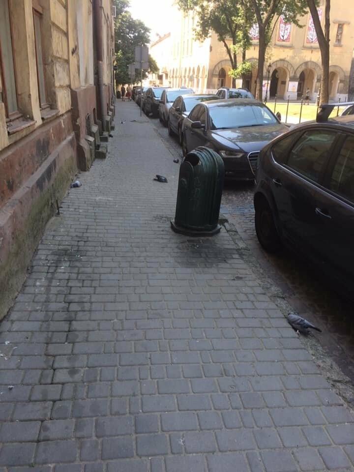 Центральні вулички Львова всіяні мертвими голубами, фото-2