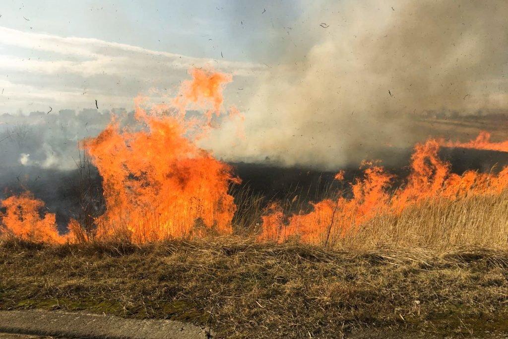 Поблизу Трускавця палають поля. ФОТО. ВІДЕО, фото-4, vartonews.com.ua