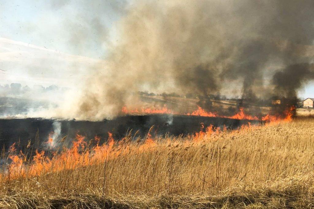 Поблизу Трускавця палають поля. ФОТО. ВІДЕО, фото-2, vartonews.com.ua