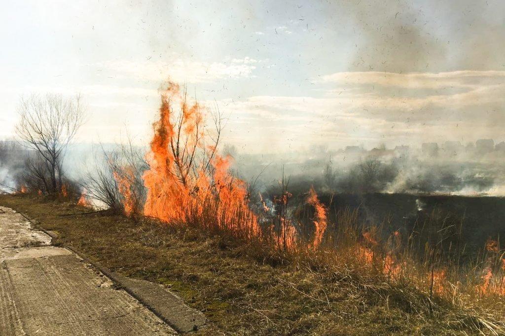 Поблизу Трускавця палають поля. ФОТО. ВІДЕО, фото-3, vartonews.com.ua