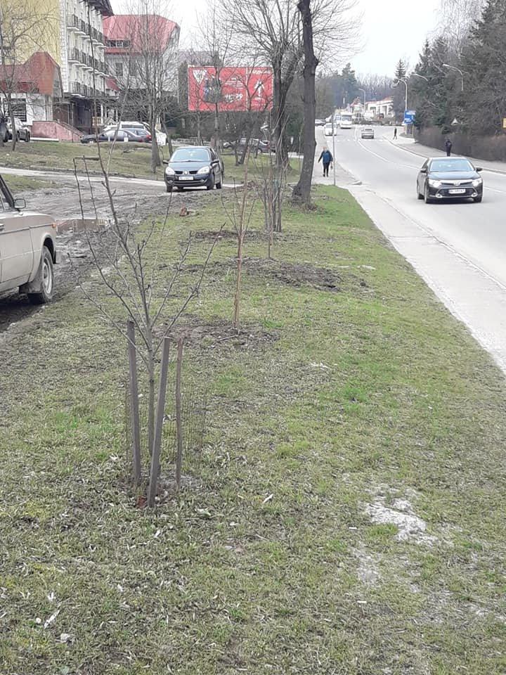 У Трускавці триває озеленення територій. ФОТО, фото-1, Фото - Трускавецька міська рада
