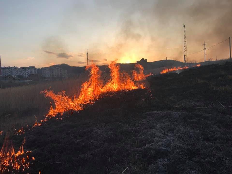 У Трускавці та Дрогобичі горіла трава, фото-3