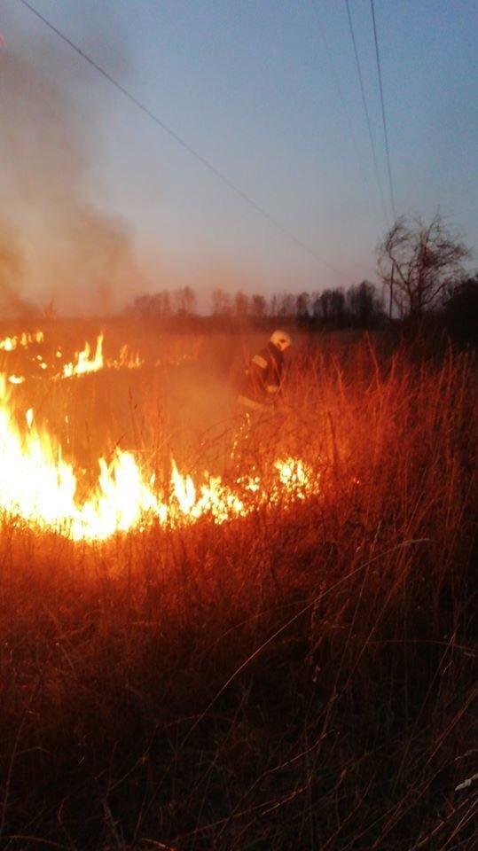 У Трускавці та Дрогобичі горіла трава, фото-4