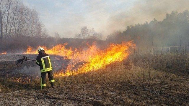 У Трускавці та Дрогобичі горіла трава, фото-2