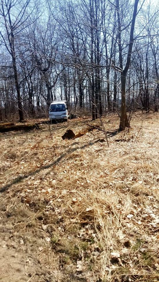 """У Трускавці в перший тиждень посиленого карантину в лісі активно рубають дерева , фото-1, Фото - Трускавецька ГО """"Мокрий Ніс"""""""