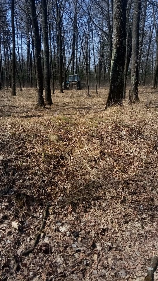 """У Трускавці в перший тиждень посиленого карантину в лісі активно рубають дерева , фото-7, Фото - Трускавецька ГО """"Мокрий Ніс"""""""