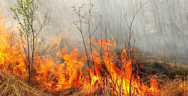 На Львівщині попереджають про надзвичайну пожежну небезпеку, фото-2