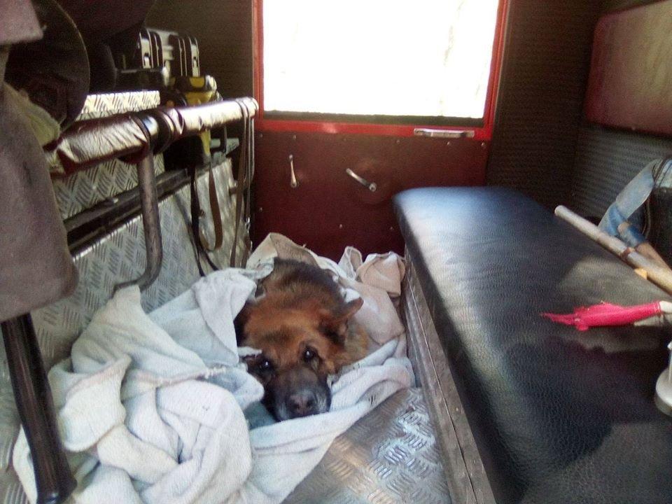 У Трускавці врятували собаку: тварина застрягла у болоті , фото-2, ДСНС