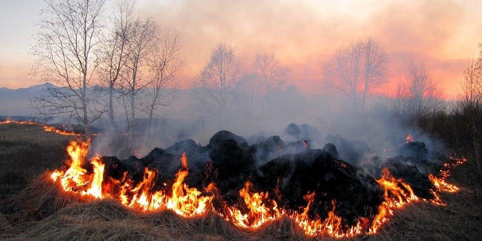 Пожежна небезпека на Львівщині. Дітки створили відеокліп про знищення природи, фото-1