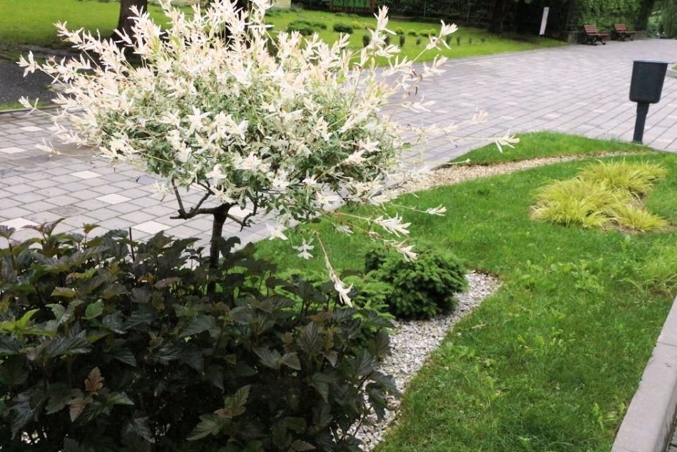 Квітковий Трускавець: місто-курорт озеленюють (Фото), фото-5, фото - Трускавецька міська рада