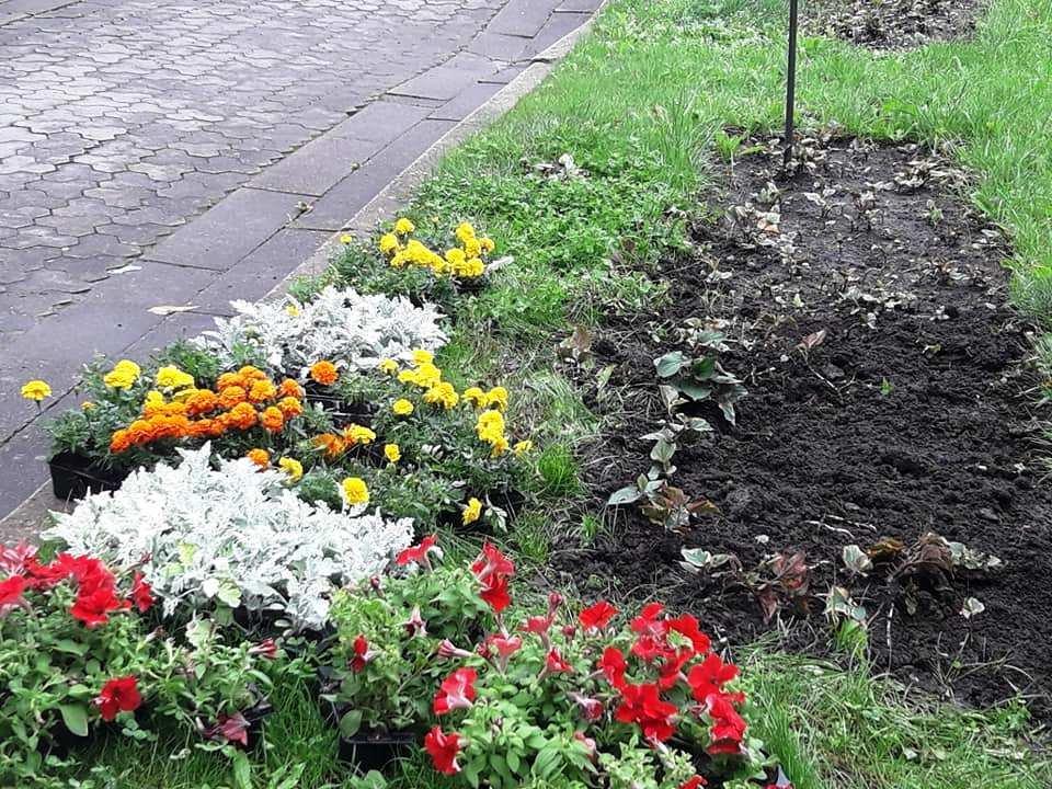 Квітковий Трускавець: місто-курорт озеленюють (Фото), фото-7, фото - Трускавецька міська рада