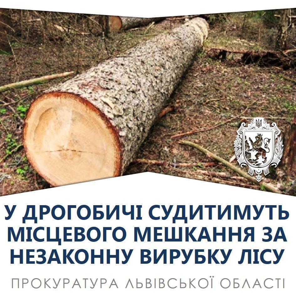 За вирубку трьох ялиць дрогобичанину загрожує в'язниця, фото-1, фото  - Прокуратура Львівської області