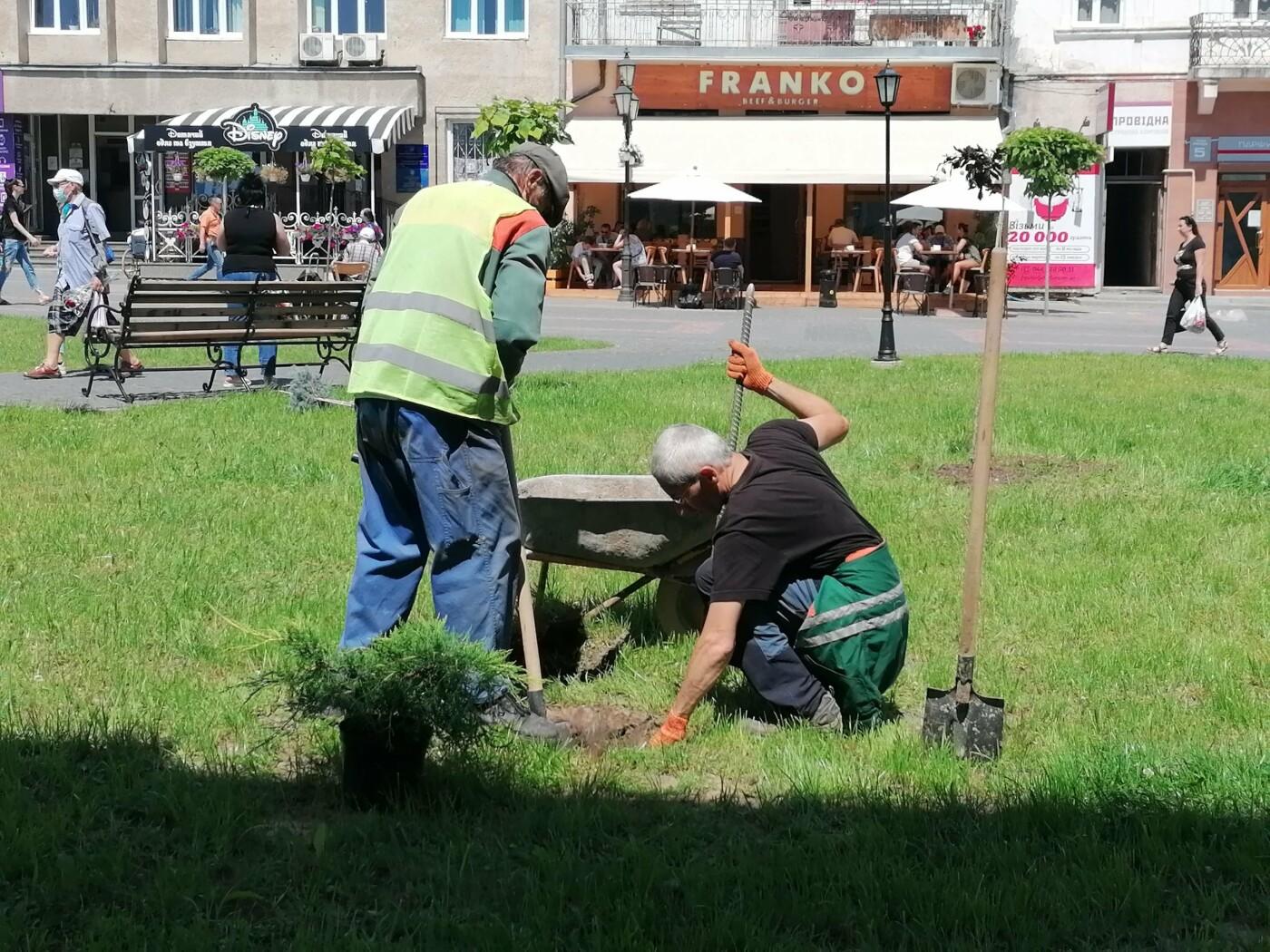 У Дрогобичі площу Ринок продовжують озеленювати (Фото), фото-3, фото - Дрогобицька міськрада