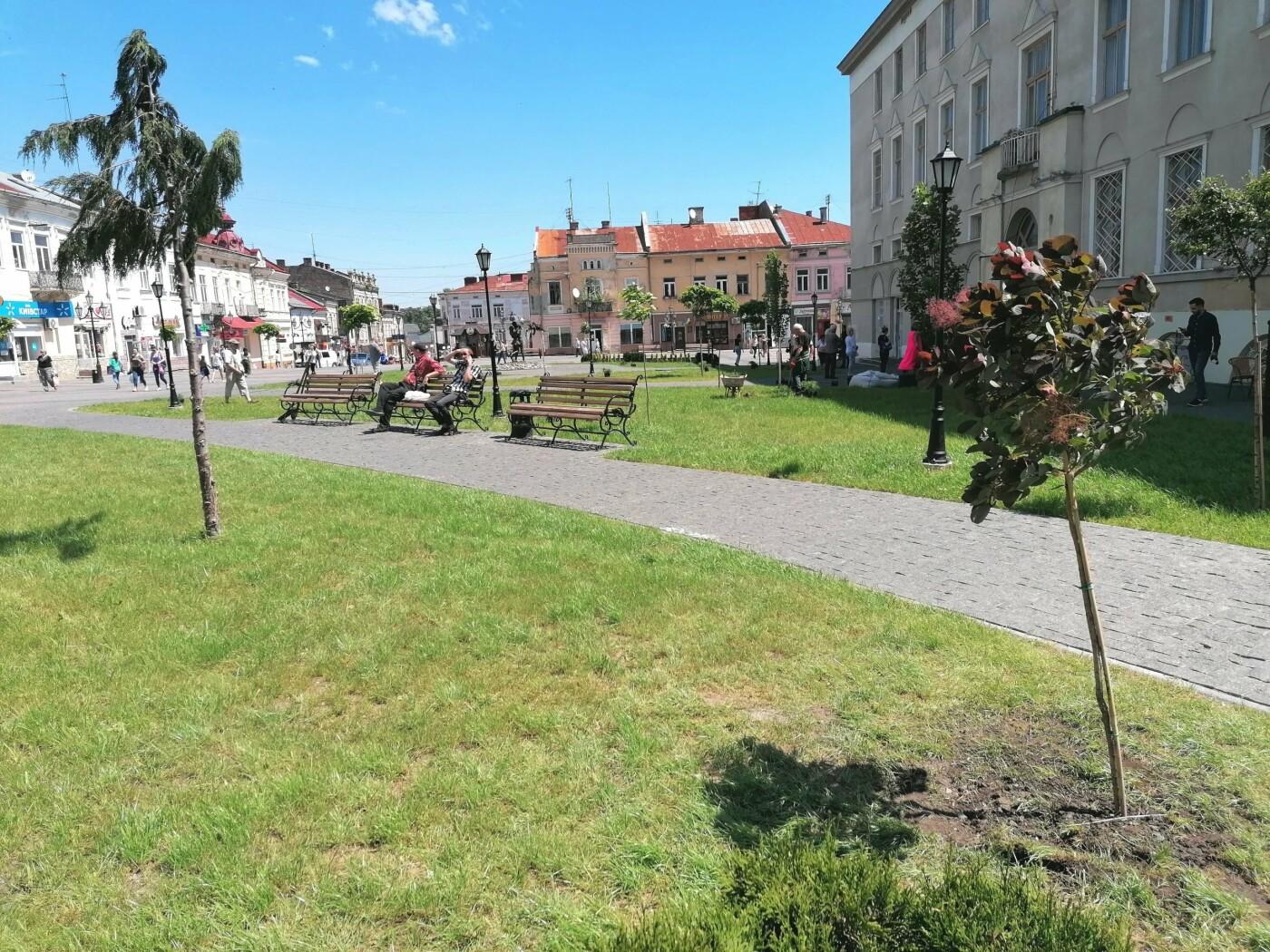 У Дрогобичі площу Ринок продовжують озеленювати (Фото), фото-2, фото - Дрогобицька міськрада