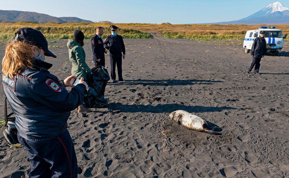 На Камчатці потужна екологічна катастрофа вбиває все живе, фото-1